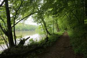 tree lined trail along river