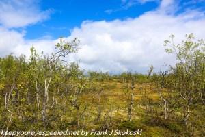 woods in Tromso