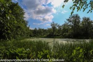 pond in wetlands