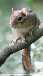 chipmunk on tree branch
