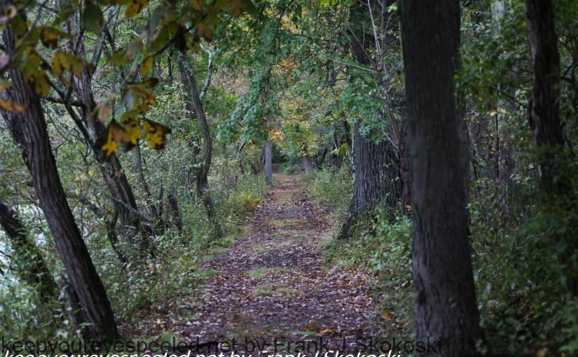 PPL-Wetlands-14-of-39