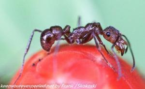 close up of ant on flower