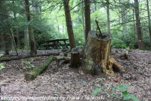 stump at camp site