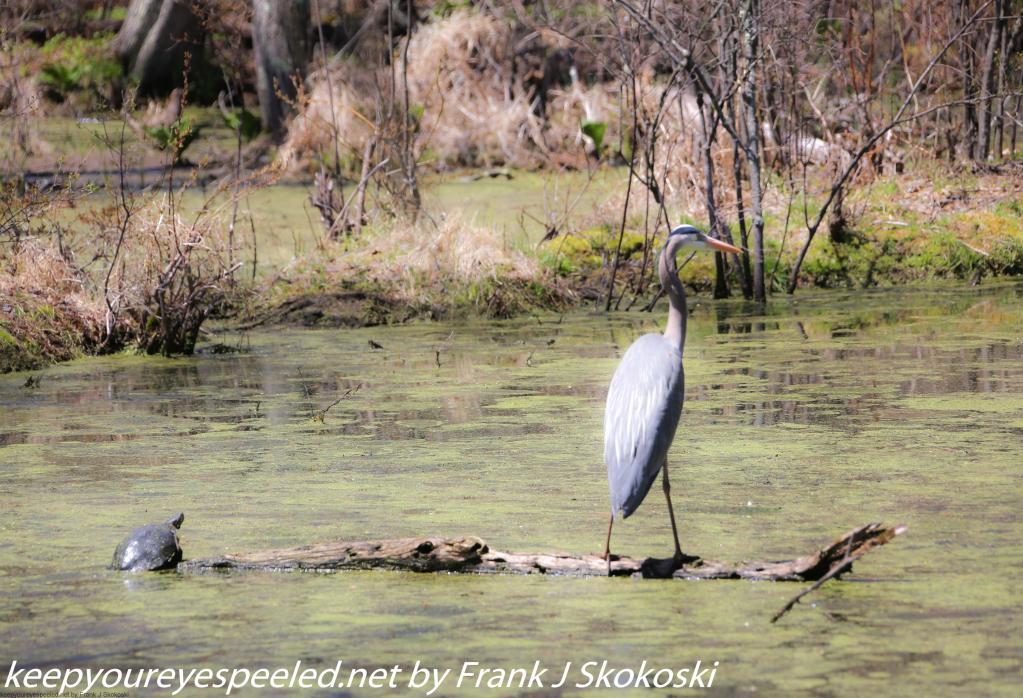 PPL Wetlands (19 of 50)