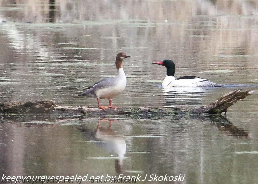 PPL Wetlands hike (16 of 50)