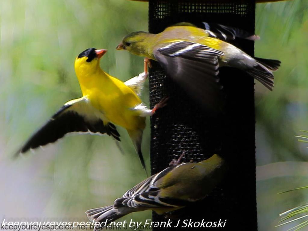 birds (19 of 19)