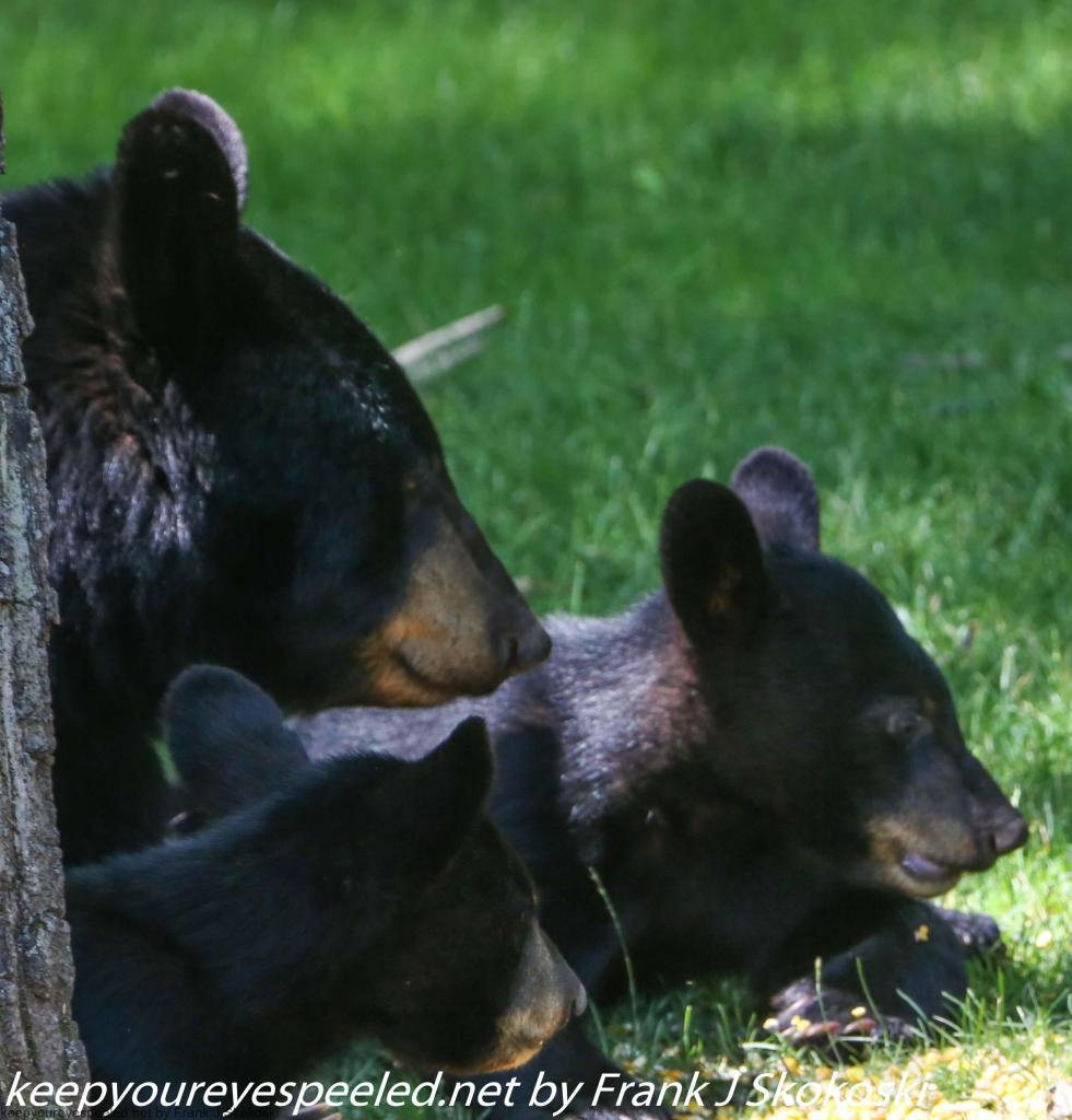 bear (3 of 14)