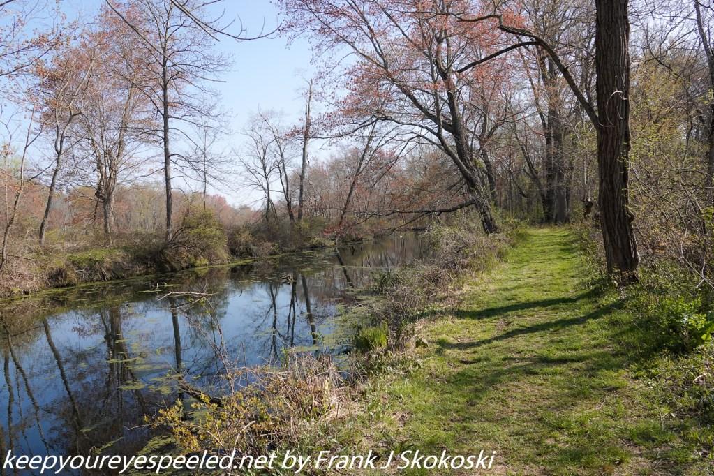 Susquehanna wetlands (5 of 32)