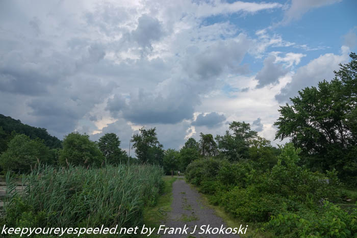 wetlands (29 of 41)