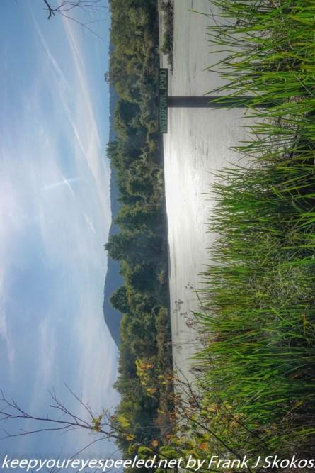 Susquehanna Wetlands s (19 of 50)
