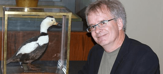 Dr. Glen Chilton and the ROM's stuffed Labrador duck
