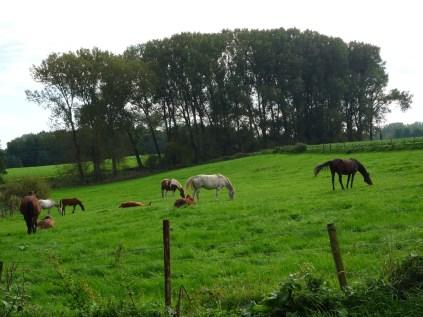 Kerkrade, near Kasteel Erenstein, 2010