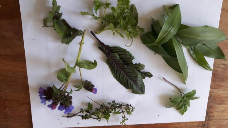 kruiden uit de tuin