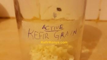 Buy Kefir Grains in Kenya