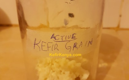 Buy Kefir Grains in Kenya