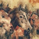 一口馬主 出資した方がいいオススメな馬と危険な馬の見分け方