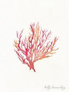 Coral Illustration