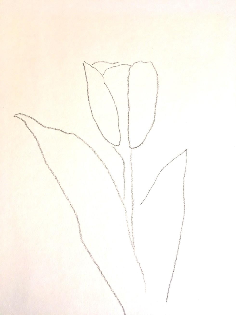 Tulip_Drawing