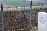 Vines on the edge of Hautvillers village