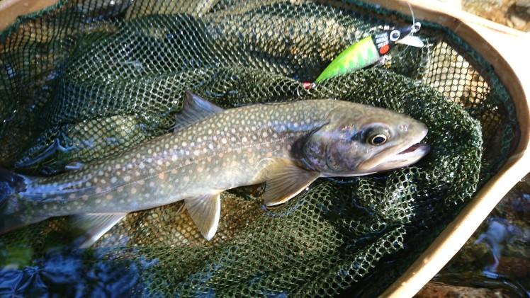 渓流釣りブログ