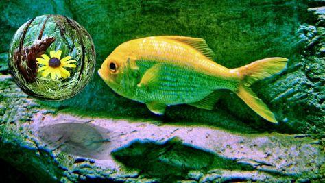 P1010894ー黄魚の希花