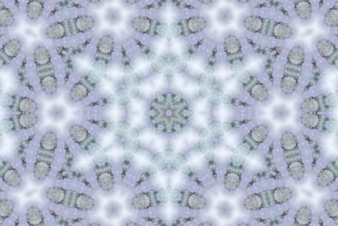 DSC_2220-4