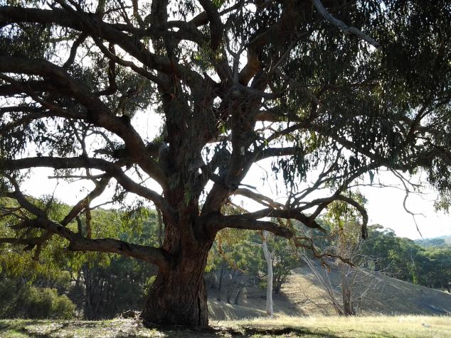 breakfasting-tree