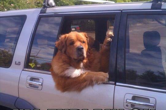 https://i2.wp.com/keithlovesmovies.com/wp-content/uploads/2015/09/dog-car.jpg?resize=540%2C360&ssl=1