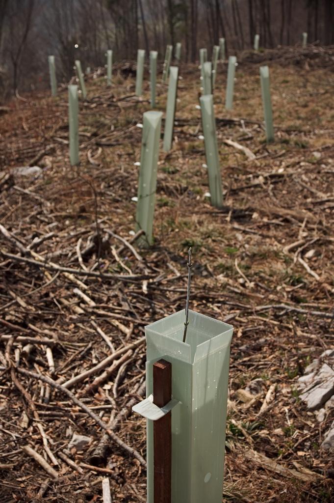 /home/springm/Bilder/2009/2009-04/dsc12031.jpg