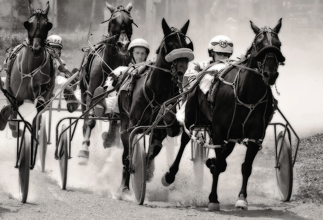A picture of harness racing ... from Canada. A competitive finish in the dust.