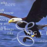 On Eagle's Wings (Isaiah 31:5)