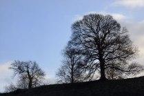 D11484-Roxburgh-Castle