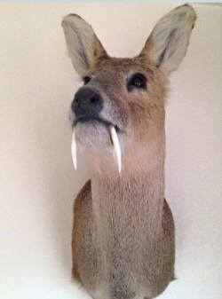 Taxidermy by Gary Tatterton - CWD Mount