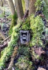 Trail Cam in the field 9
