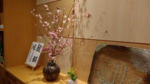 桜と菜の花で春の演出