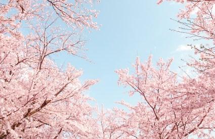 Spring in Tokyo (Part 1 of Japan Trip)
