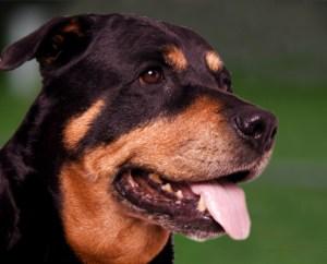 Keizer Feerwerd - Honden