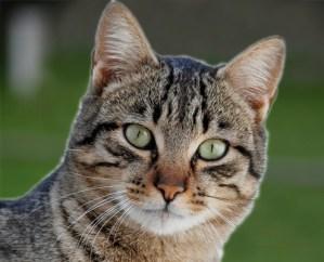 Keizer Feerwerd - Katten