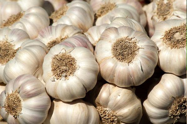 garlic_ail_delivery_lebanon