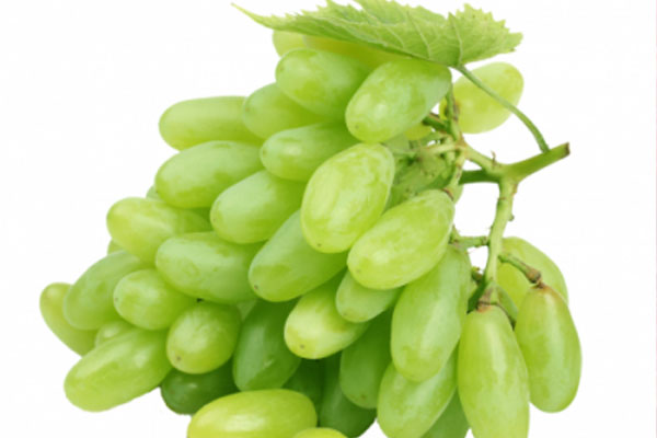 raisin_grapes_vert_green2_long_delivery_lebanon