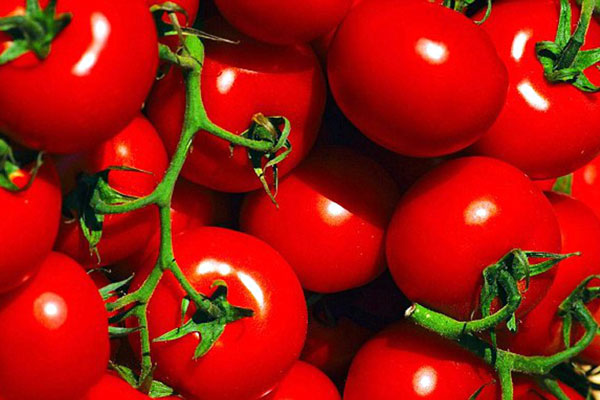 tomato_bunch_grappe_delivery_lebanon