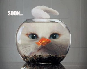 soon-meme-cat