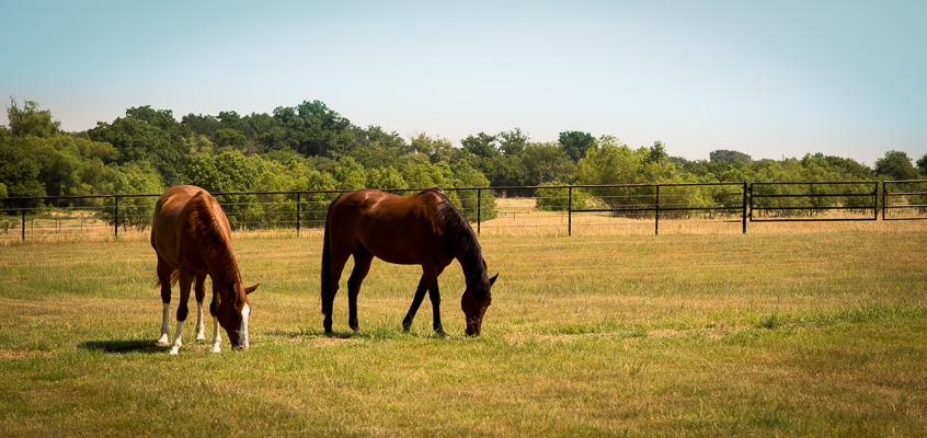 Horses grazing in pasture | Kelley K Photography