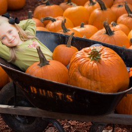 Girl with pumpkins | Kelley K Photography