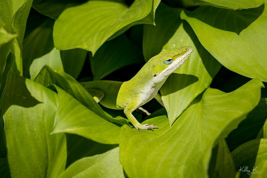 Fine art macro of green lizard on green leaves