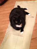 "My cat Buffy, ""helping"" with the fabric. lol"