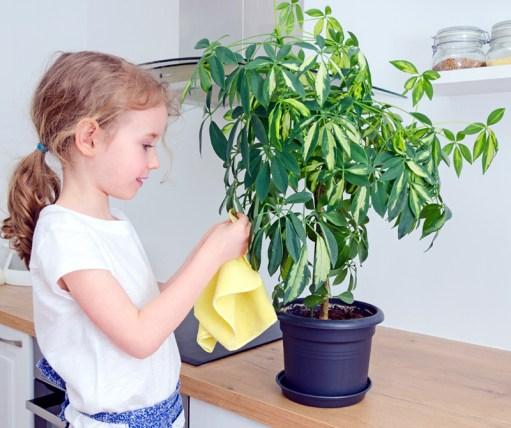 Little girl wipes dust from the flower leaves.; Shutterstock ID 193393082; PO: Cat Overman; Job: blog post
