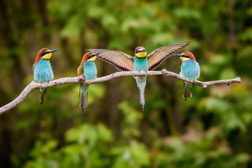 Ornithology And Why It Is Important To Study It?