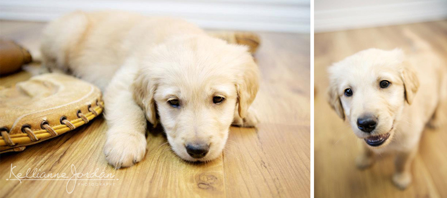 Puppy Portraits with Baseball Glove