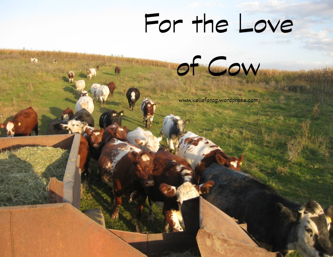 FortheLoveofCow